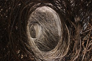 Patrick Dougherty (1945), Shindig, 2015 {JPEG}