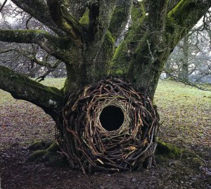 Andy Goldsworthy {JPEG}
